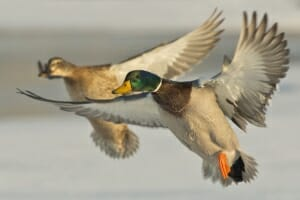 Ducks Unlimited Cleveland County Banquet