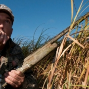 How To Call In Geese During Early Goose Season